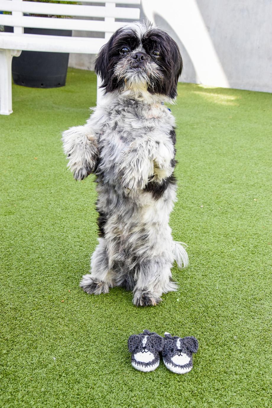 battersea dog crochet pattern